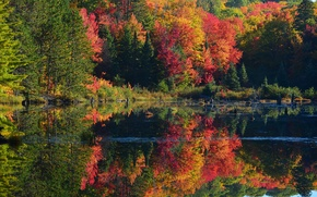 Picture autumn, forest, trees, pond, river