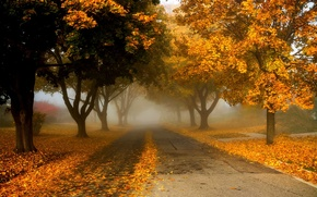 Picture road, autumn, leaves, nature, colors, colorful, road, trees, nature, autumn, leaves, walk, path, fall