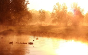 Picture fog, lake, duck, morning