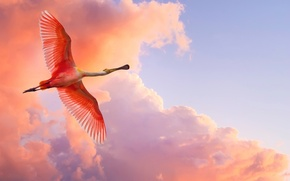 Picture BACKGROUND, The SKY, WINGS, CLOUDS, FLIGHT, BIRD, BEAK, TAIL