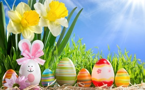 Picture grass, the sun, flowers, eggs, spring, Easter, sunshine, happy, flowers, daffodils, spring, eggs, easter