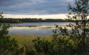 Picture trees, sunset, lake, swamp, the evening, Ladoga, lake Ladoga