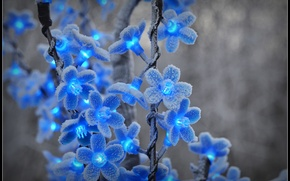 Picture winter, frost, snow, flowers, frost, blue, garland, lanterns