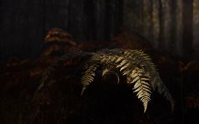 Picture autumn, nature, fern