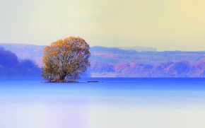 Picture autumn, lake, tree, island, Ireland