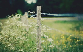 Picture white, macro, flowers, yellow, background, widescreen, Wallpaper, the fence, fence, the fence, wallpaper, flowers, widescreen, …