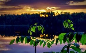 Picture landscape, sunset, branches
