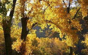 Wallpaper autumn, leaves, nature