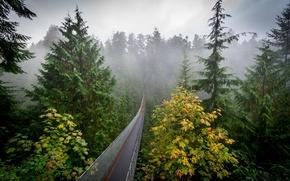 Picture autumn, forest, nature, fog, haze, the bridge
