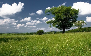 Wallpaper tree, the sky, greens, field