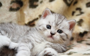 Wallpaper cat, kitty, cat