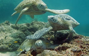 Picture sea, fish, the bottom, turtles