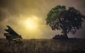 Picture field, nature, piano