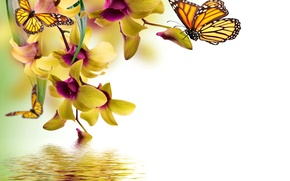 Picture butterfly, flowers, yellow, Orchid, water, flowers, beautiful, orchid, spring, reflection, butterflies