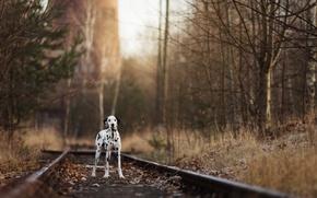 Wallpaper each, dog, railroad