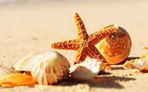 Picture sand, sea, macro, nature, shell, starfish, sea, nature, macro, sand, shells, sea star