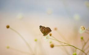 Picture white, summer, flowers, butterfly, blur, cornflower