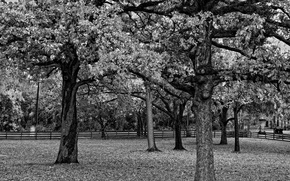 Picture black and white, The fence, Trees, Branch, Foliage