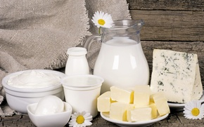 Picture flowers, oil, chamomile, cheese, milk, pitcher, sour cream