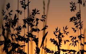 Wallpaper grass, sunset