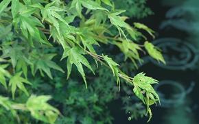 Picture leaves, Kotonoha no Niwa, The garden of words, Makoto Xingkai