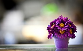 Picture flowers, background, pot