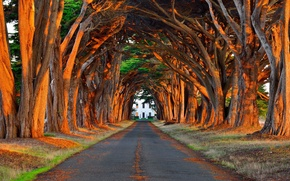 Picture road, light, trees, Park