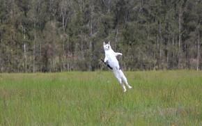 Picture cat, grass, cat, jump, meadow, start, normal flight, Cat-rocket, Rocket Cat
