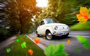 Picture road, autumn, leaves, car, Germany, Fiat 500, Hamburg