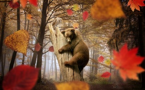 Picture bear, owl, trees, leaves, falling leaves, mushrooms, autumn, forest