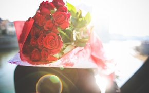 Wallpaper flowers, petals, roses, gift, red