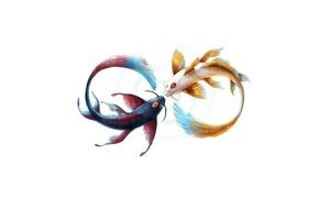 Picture fish, art, Yin, Yang, infinity