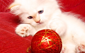 Wallpaper cat, kitty, new year, toy