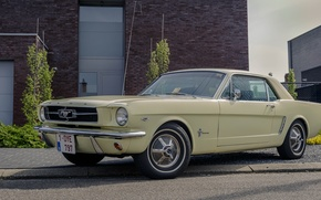 Picture Mustang, Ford, old, 1964