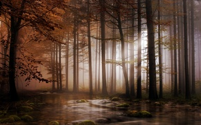 Picture forest, light, trees, river, stones, moss, crown