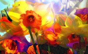 Picture line, flowers, rendering, paint, petals, Narcissus