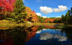 Picture autumn, forest, the sky, clouds, trees, pond