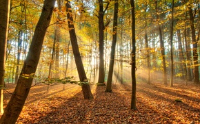 Picture autumn, forest, light, trees, nature