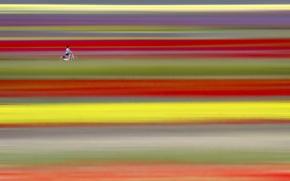 Picture field, bike, minimalism
