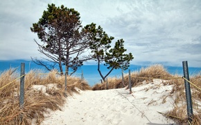Picture dunes, sea, summer, beach, landscape