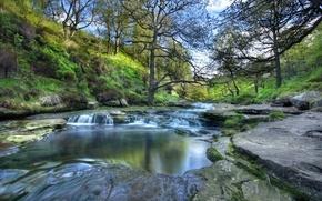 Picture trees, river, the slopes, England, England, national Park Peak district, Peak District National Park