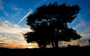 Wallpaper tree, the sky, shadow, sunset