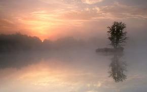 Wallpaper tree, morning, lake, reflection, fog
