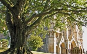 Picture trees, Gothic, England, Church, Cathedral, architecture, Cathedral, England, Church, St. Peter, Cathedral, of St. Peter, …
