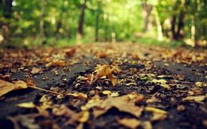 Picture road, autumn, asphalt, leaves, macro, nature, yellow, blur, dry, fallen, bokeh