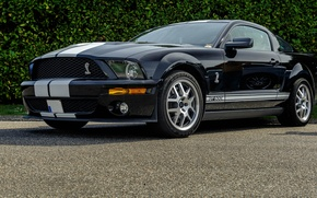 Picture Shelby, White, 500, Stripes