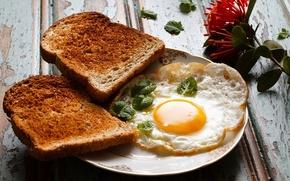 Picture food, Breakfast, bread, scrambled eggs, toast