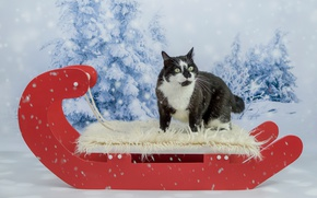 Wallpaper cat, eyes, photoshoot, new year, Christmas, background, snow, cat, red, ate, fur, crazed, face, black ...