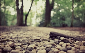 Picture road, forest, nature, bokeh