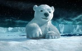 Picture white, snow, bear, pole